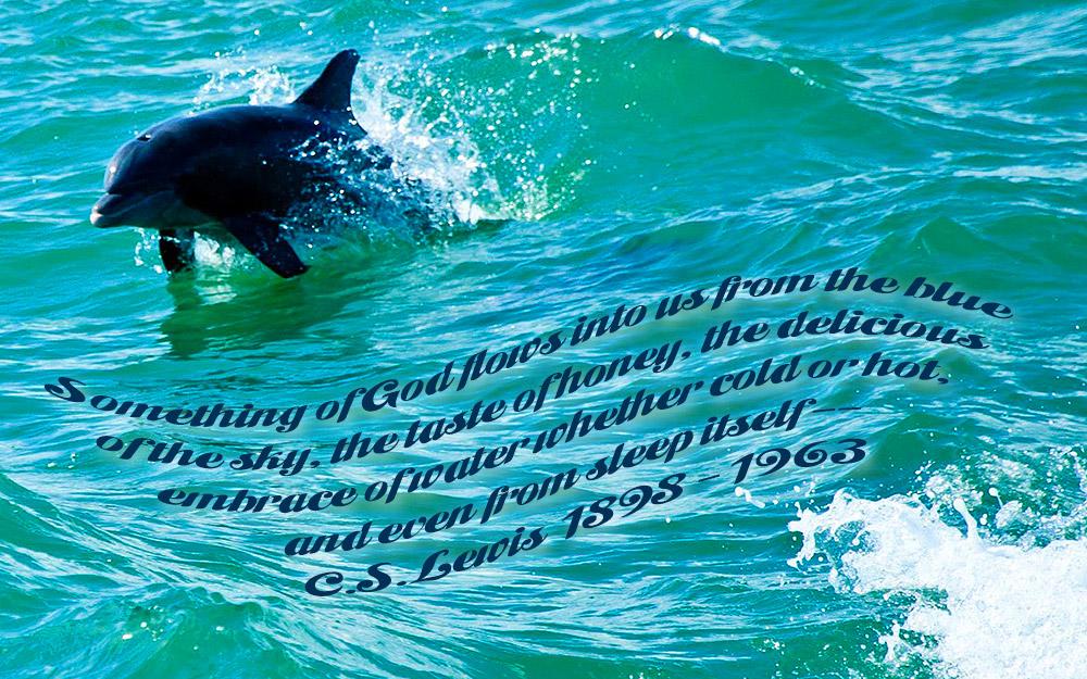 dolphin-ocean
